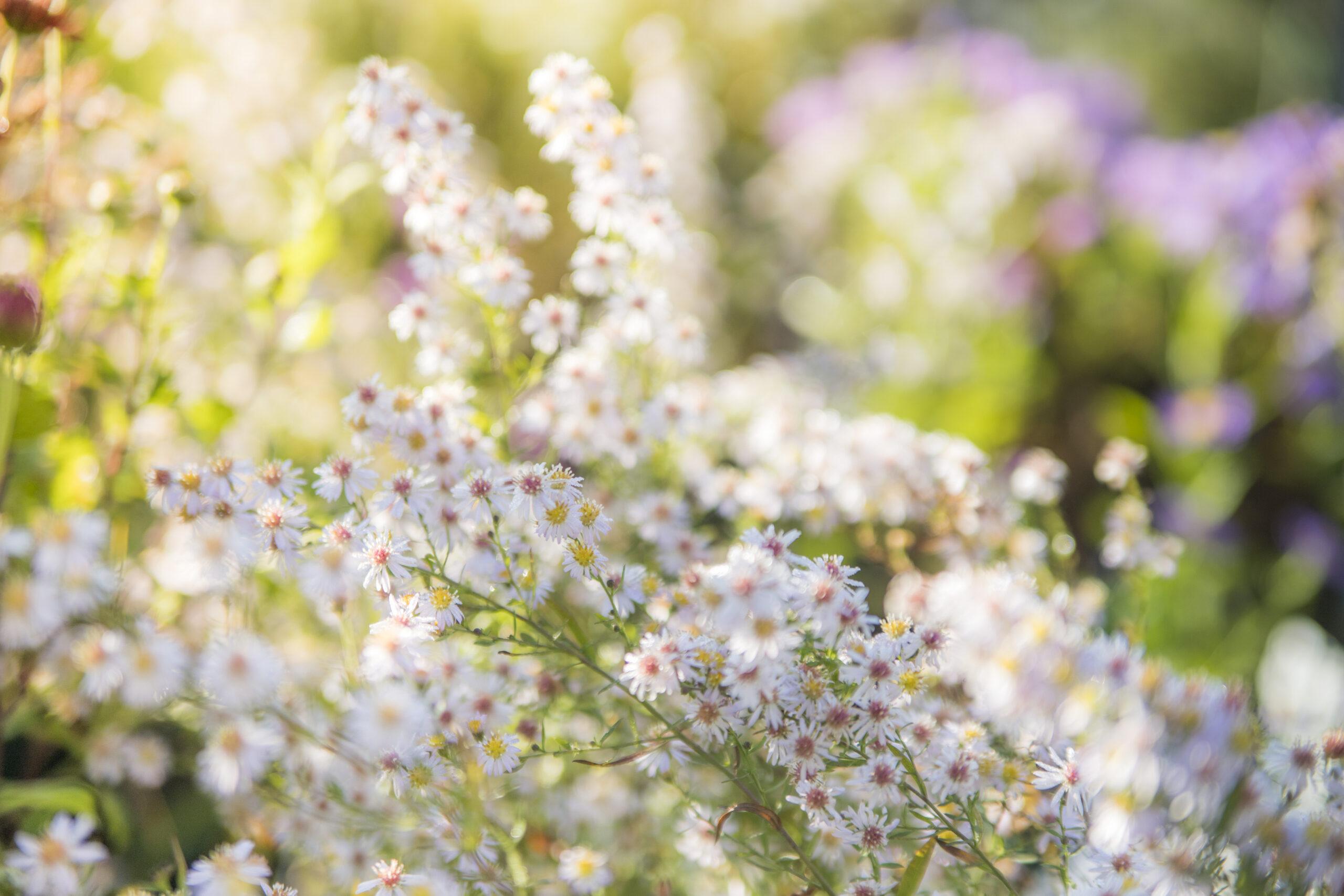 Frühlingsluft & Gartenlust